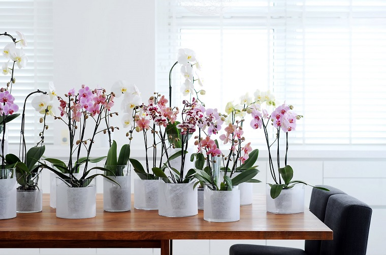 comment-soin-une-orchidée-belles-fleurs