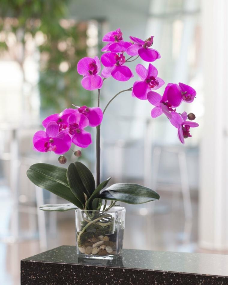 comment-soigner-une-orchidée