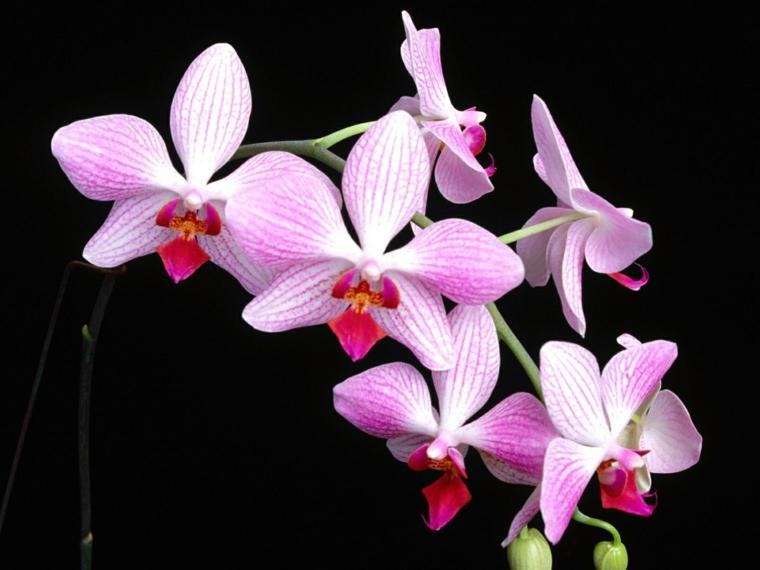 comment-soin-une-fleur-d'orchidée