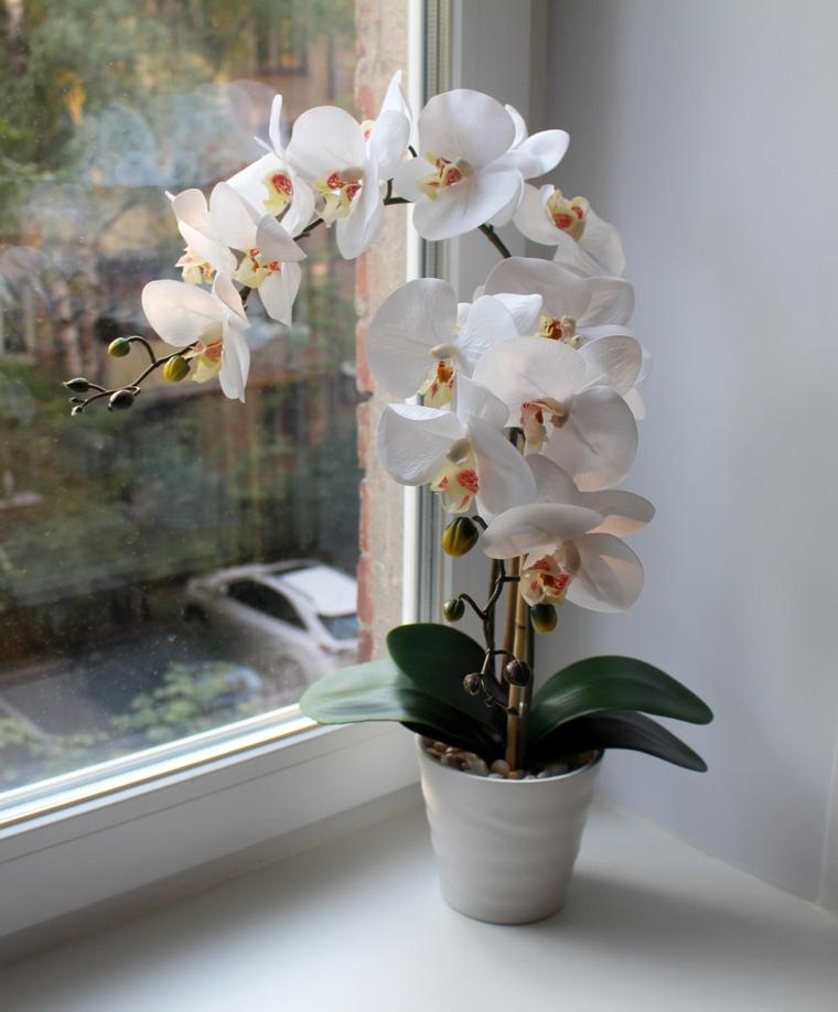 comment-soin-une-fleur-d'orchidée-blanc-belle