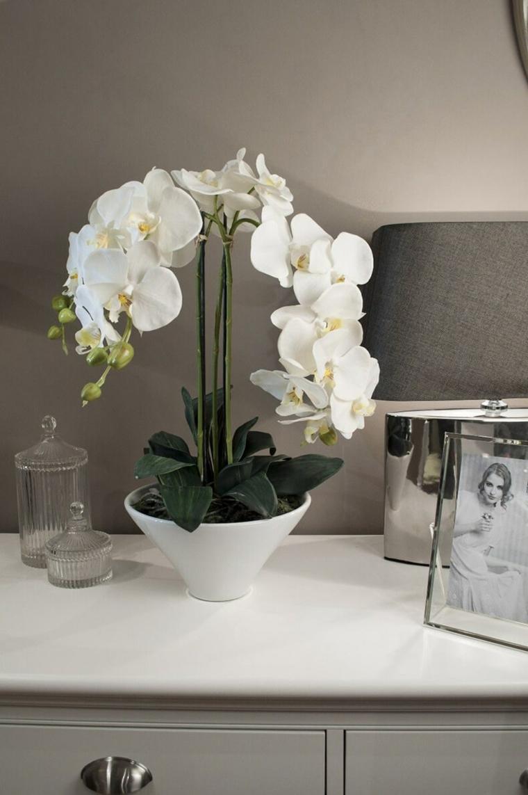 comment-soigner-une-orchidée-fleur-blanc-idees