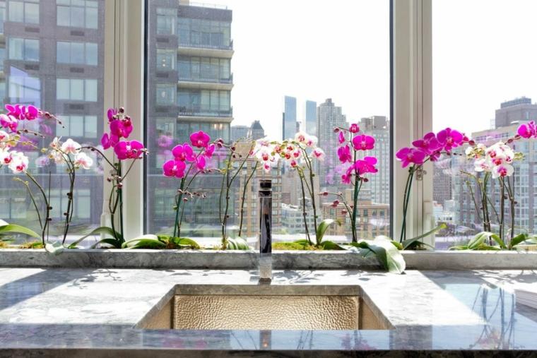 comment-soin-une-fleur-d'orchidée-rose-blanche