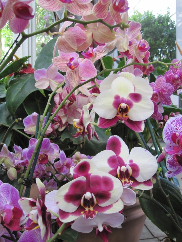 Comment prendre soin d'une fleur d'orchidée