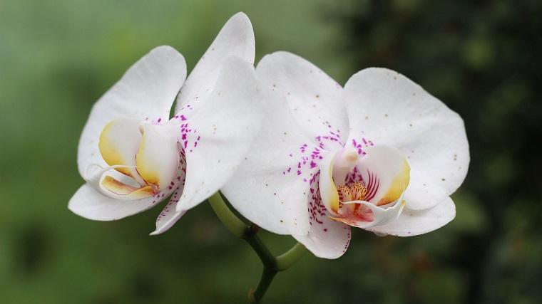 comment entretenir une idée de fleurs d'orchidées