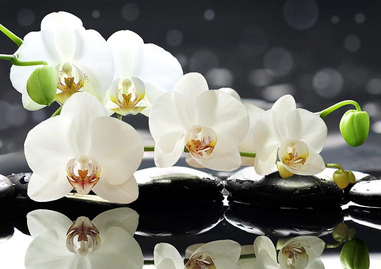 comment entretenir une idée de fleur d'orchidée