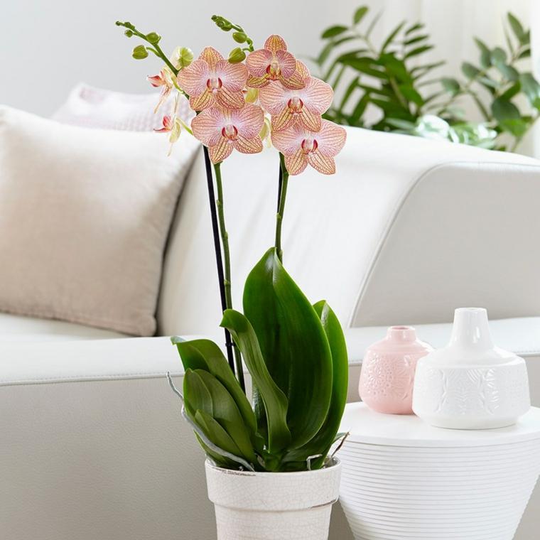 comment entretenir une maison d'orchidée-fleur-intérieur