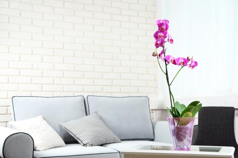 comment prendre soin d'une rose-fleur d'orchidée