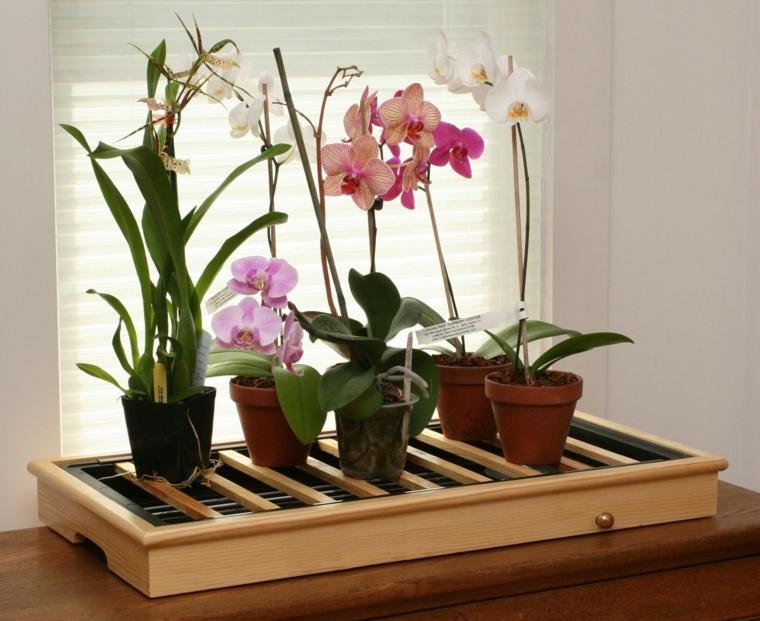 comment prendre soin d'une maison-options d'orchidée