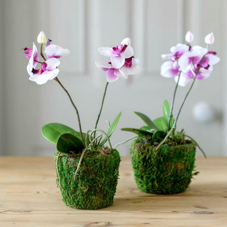 comment prendre soin d'une orchidée options-idées