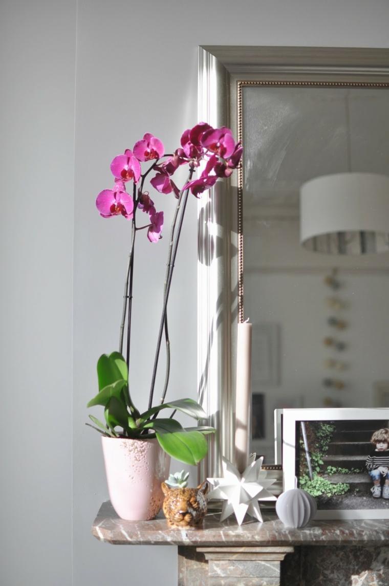 soins-orchidées-idées-options