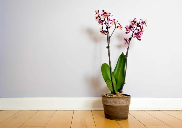 prendre soin-orchidées-idees-fleurs