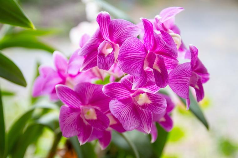 orchidées-fleurs-soins-options
