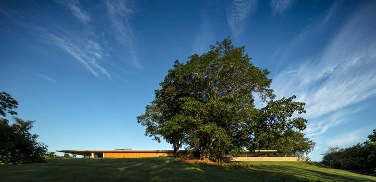 toit vert de conception écologique