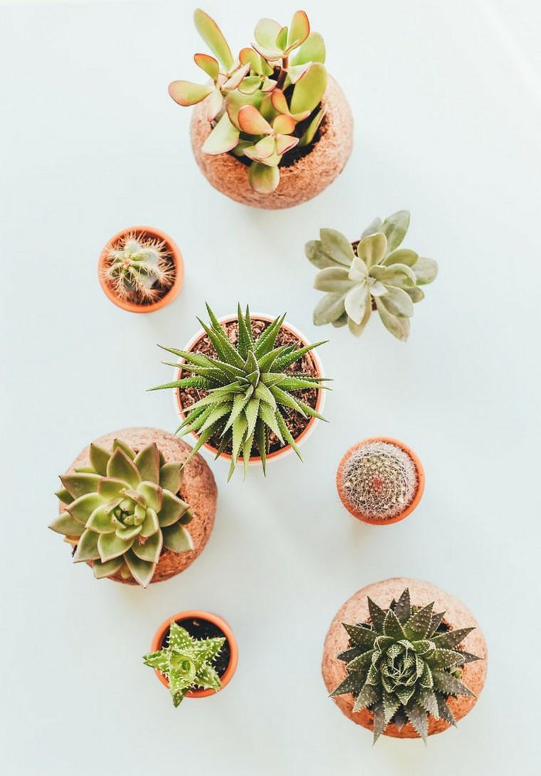 plantes-plantes-succulentes-décoration-idées