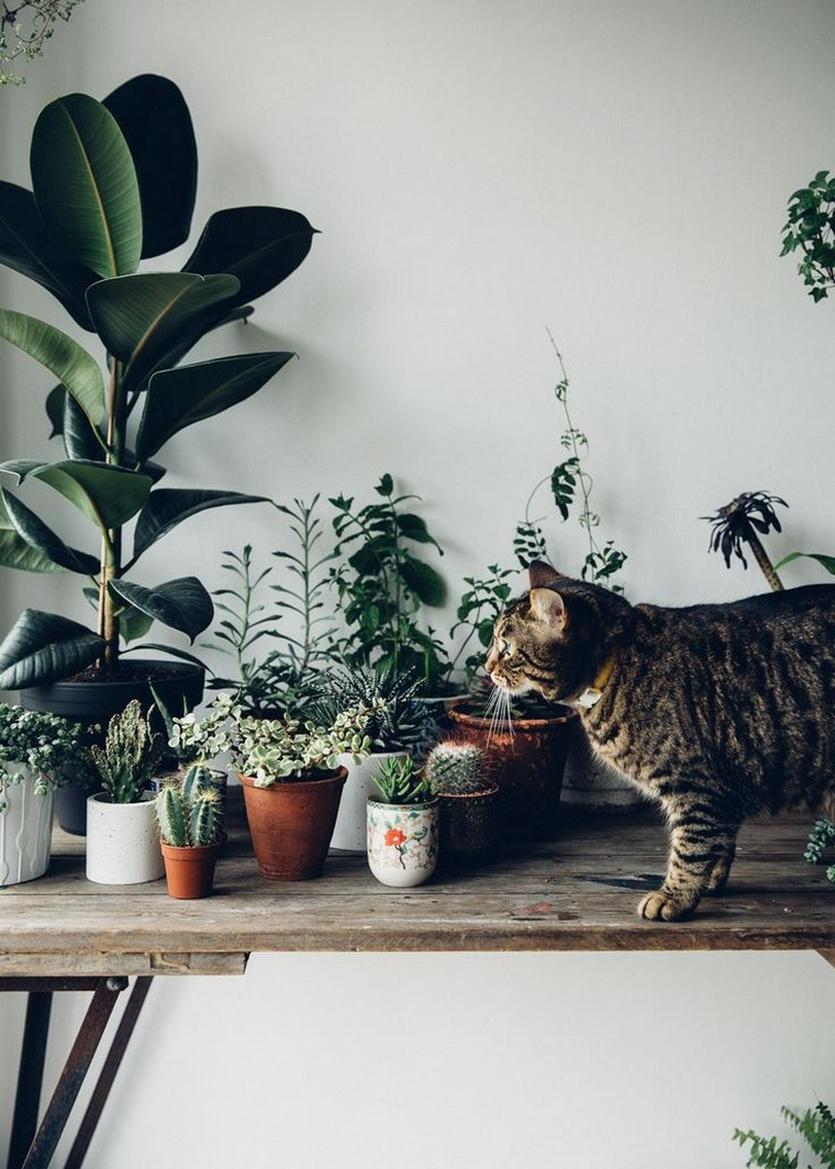 belles fleurs-interieur-maison-plantes-idees