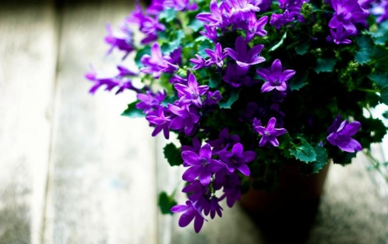 fleurs-interieur-maison-options
