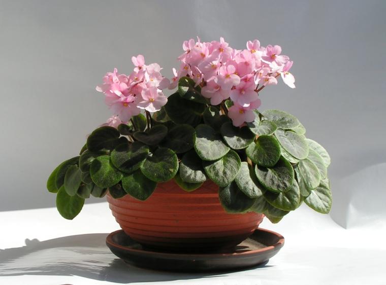 idées-fleurs-maison-beauté-options-plantes