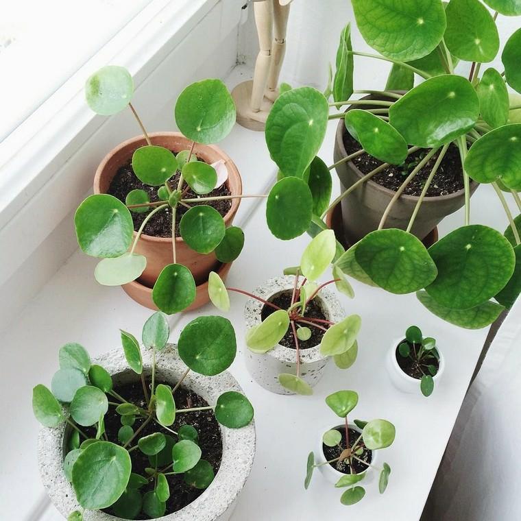 plantes-interieur-bella-decoracion-habitaciones
