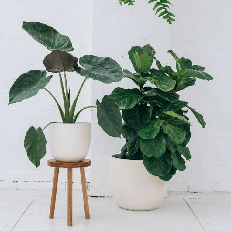 plantas-pots-blanc-idees-options