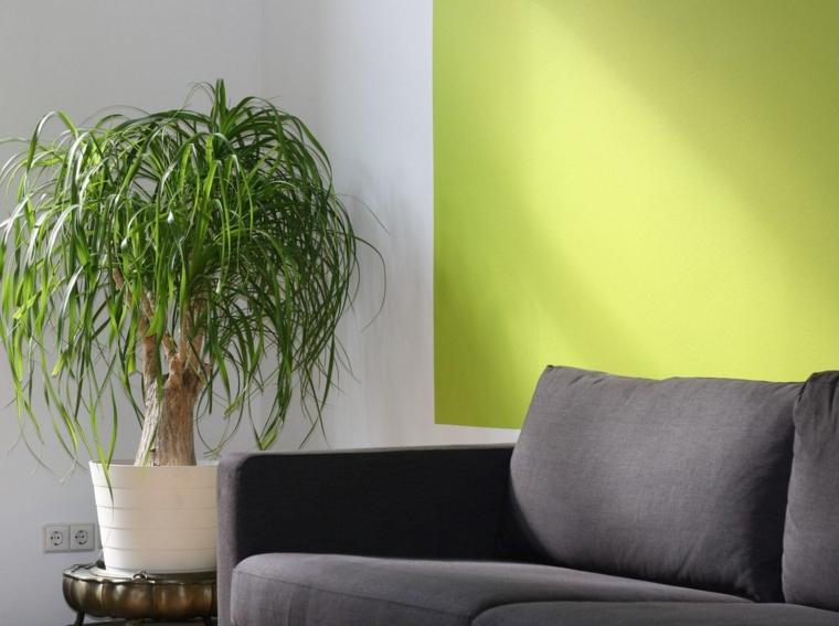 décoration dintérieur-murs-verts