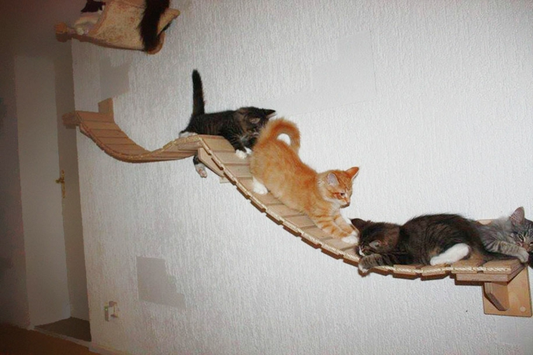 jeux de chats