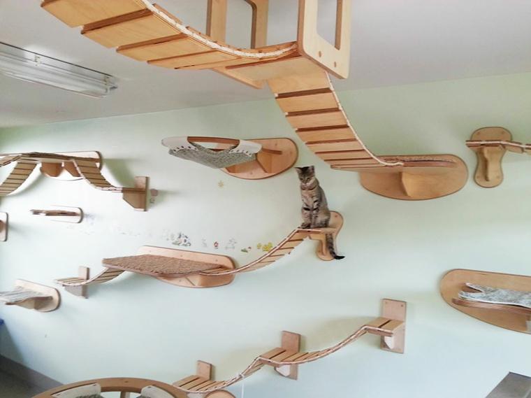 salle-de-jeux-pour-chats