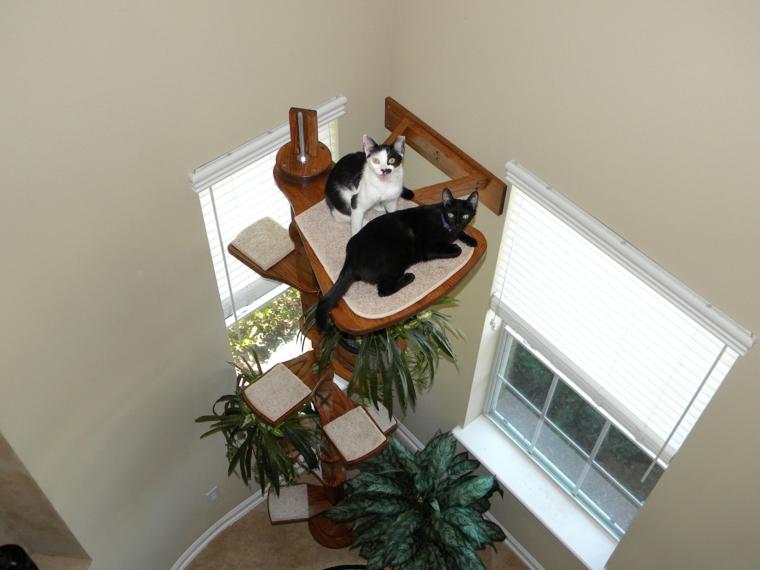 étagère pour chats