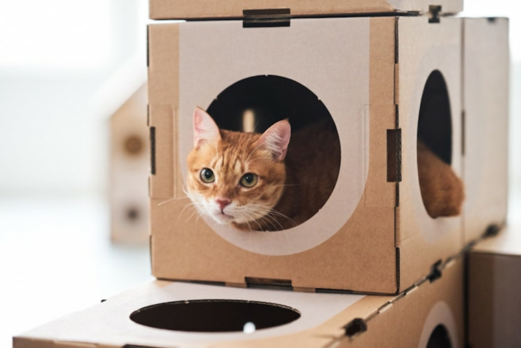 boîtes pour chats