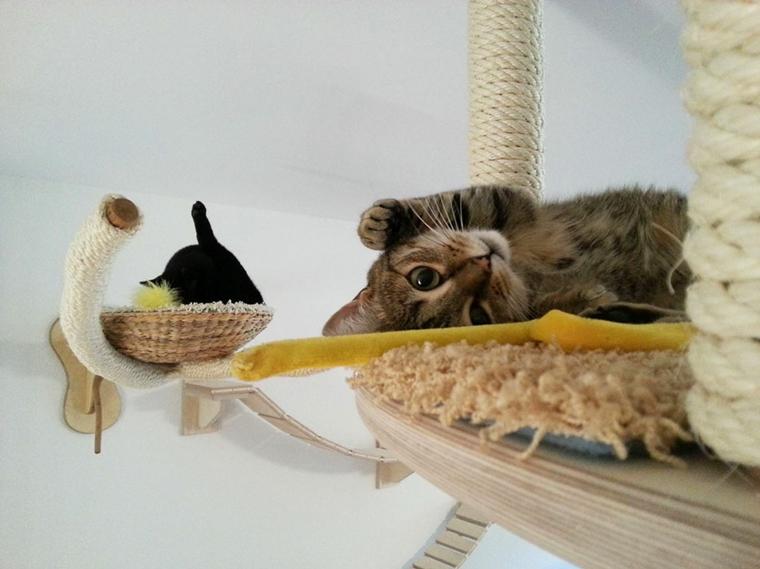 idée de jeux pour chats