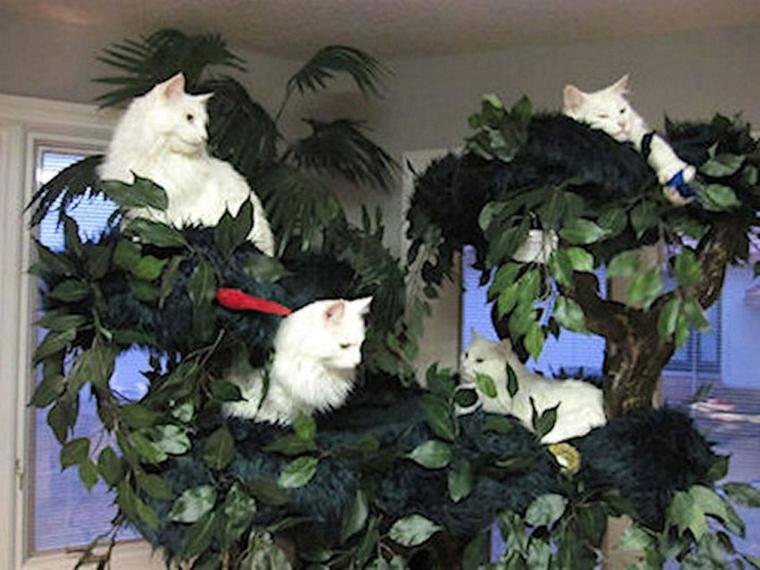 arbre pour chats