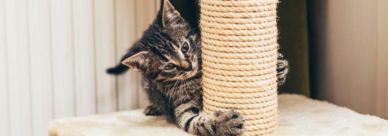 chat avec grattoir