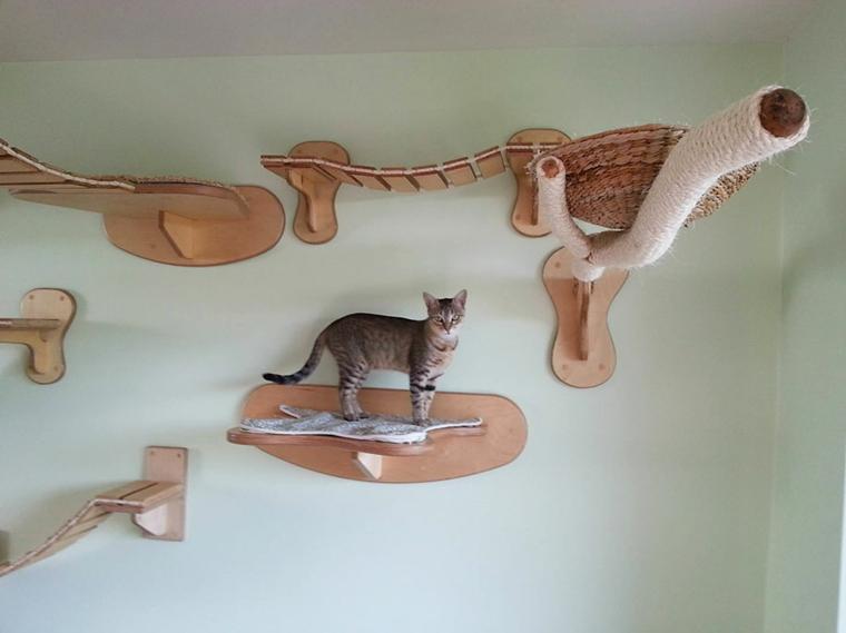 jeux pour chats sur le mur