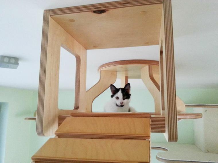 jeux pour la conception de chats