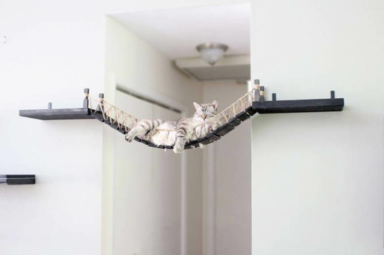 ponts pour chats