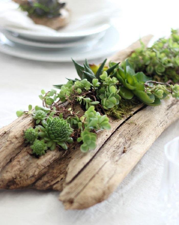 jardinières-plantes-centre-table