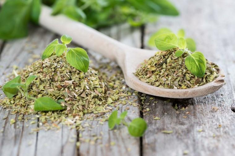 plantes aromatiques pour condiments