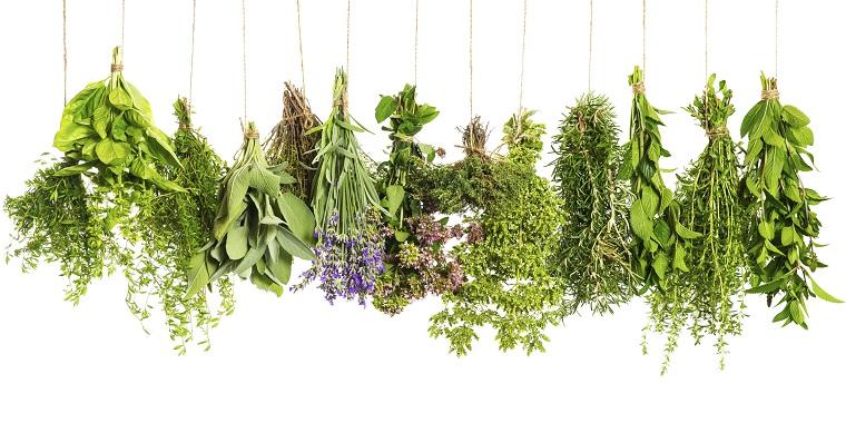 herbes médicinales-santé-bien-être-idées