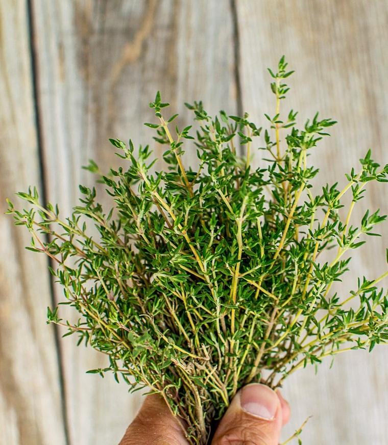 herbes-médicinales-santé-thym