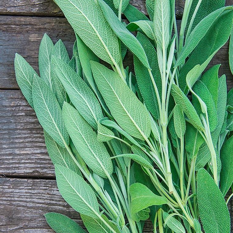 herbes-santé-salvia-options