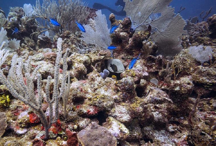 vie-marine-riviera-maya