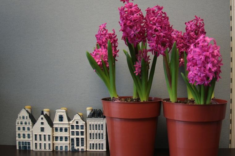 fleurs-interieurs-soins-vacances