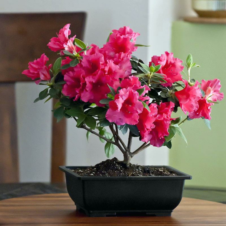 espèces de fleurs-soins-vacances