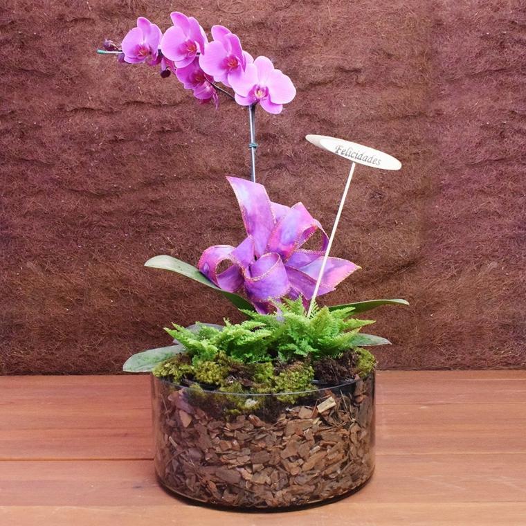 soin des vacances d'orchidées