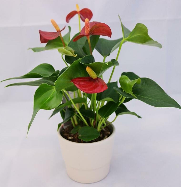 plantes avec fleurs-soins-vacances