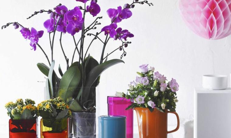 types de fleurs groupées-vacances
