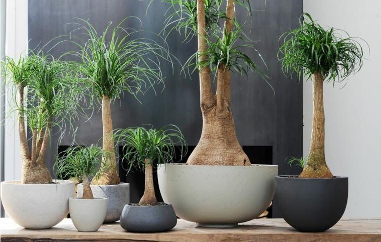plantes d'intérieur assez jolies