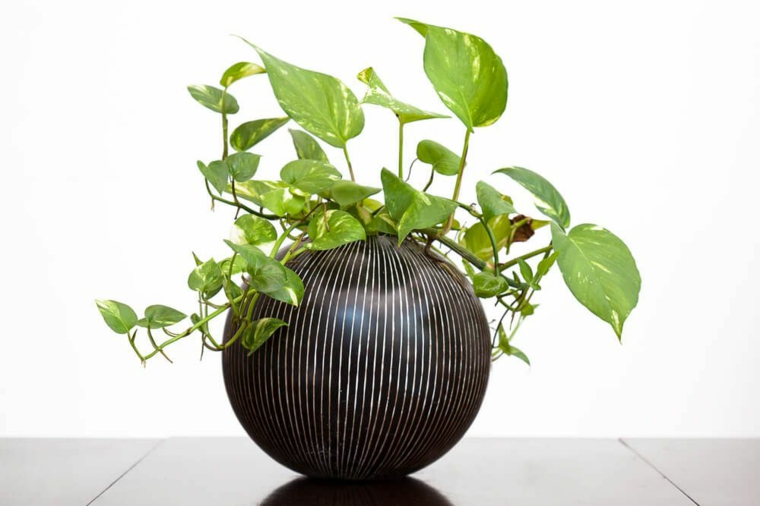 ombre d'intérieur plantes-potus