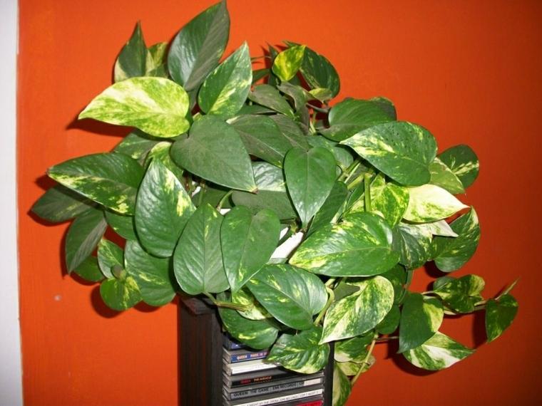 le soin des plantes résistantes