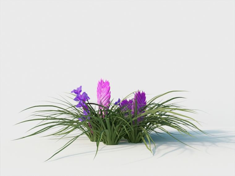 prendre soin des plantes-tillandsia