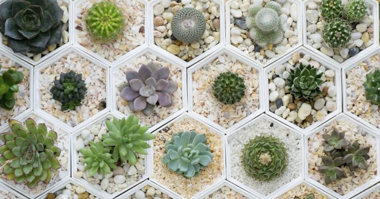 photos de plantes-crassas-intérieurs